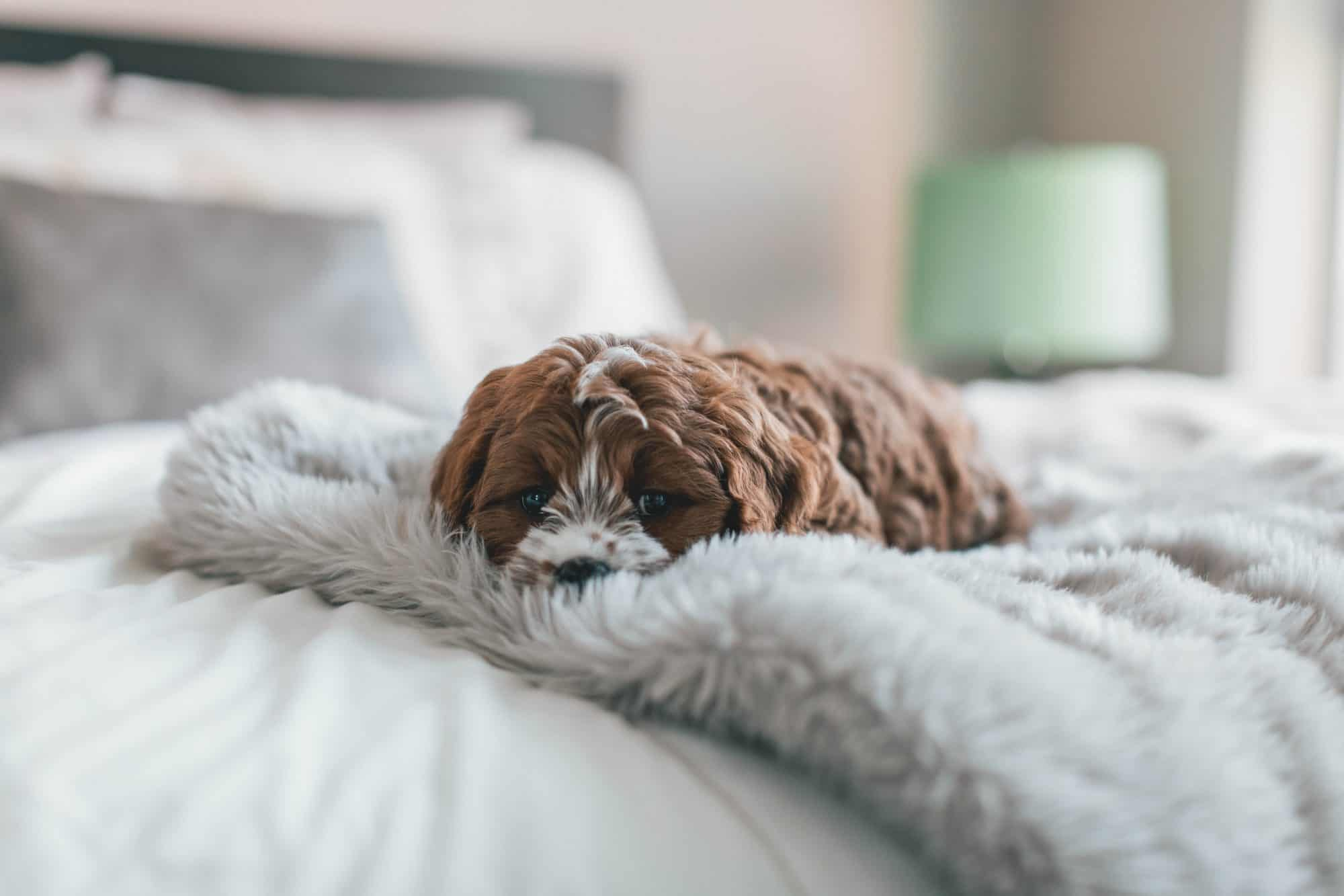 Pet Friendly Best Loved Hotels